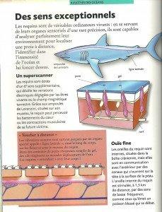 Requin (1)