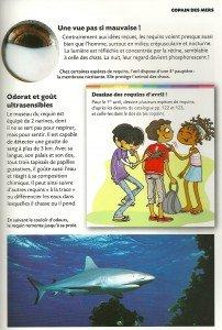 Requin (2)