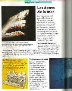 Requin (3)