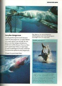 Requin (4)