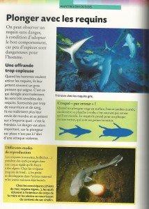 Requin (5)